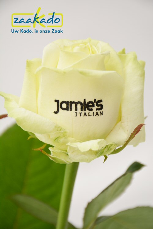 Bloeiende groene eco relatiegeschenken logo bedrukken giveaway rozen beurzen events opendag Rotterdam ZaaKado bv