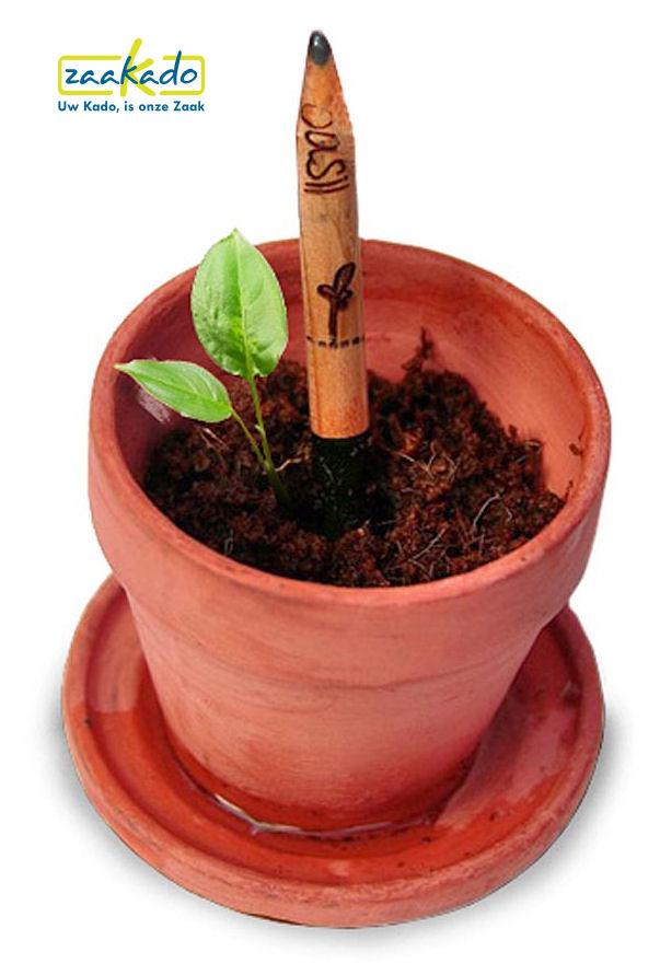 Groeiende potlood met zaden peterselie met uw bedrijfsnaam gravure als uniek origineel relatiegeschenk MVO ECO duurzaam groen CSR ZaaKado