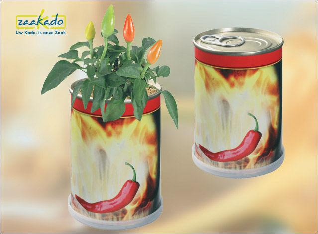 blik met rode peper, klavertje met uw logo gepersonaliseerd bedrukking bloeiende Relatiegeschenken Rotterdam ZaaKado 644