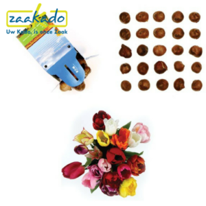 bloembollen full colour doosje personaliseren ontwerpen planten logo kleuren hollandse bloemen bollen ontwerpen exclusief Zaakado relatiegeschenken zaakadotip giveaway inspiratie rotterdam gadget