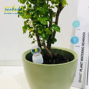 directmailing DM verhaal vertellen wij zijn op tijd gimmick logo planten water aarde reminder geluid piepen Zaakadotip relatiegeschenken zaakado giveaway inspiratie r